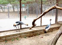 Бакинский зоологический парк. Азербайджан, 03 августа 2013 г.