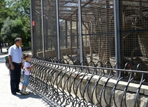 Summer at Baku Zoo
