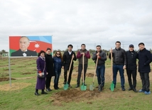 New Azerbaijan Party holds tree planting event