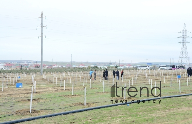 Celebration in Mushfigabad, campaign to plant 650,000 trees, concert, celebrities.Azerbaijan Baku 6 december 2019